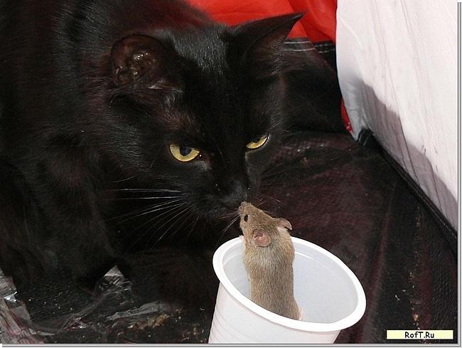 ПОСИДЕЛКИ БАСНОПИСНЫЕ. Мышь и кот