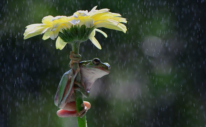 «Вот это я удачно заскочила!» животные, зонтик