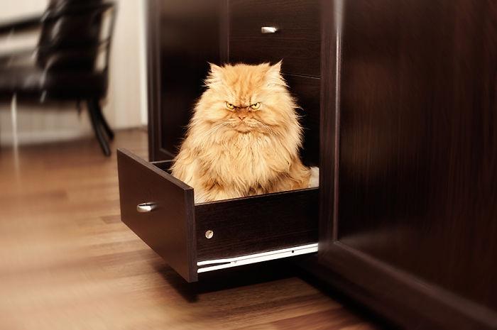 Garfi02 Гарфи, самый сердитый кот в мире