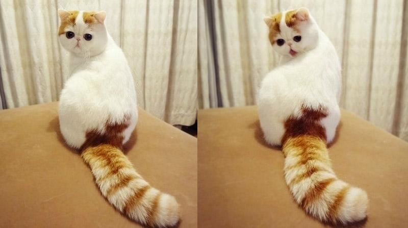 кисты какие породы кошек самые милые этой статье речь