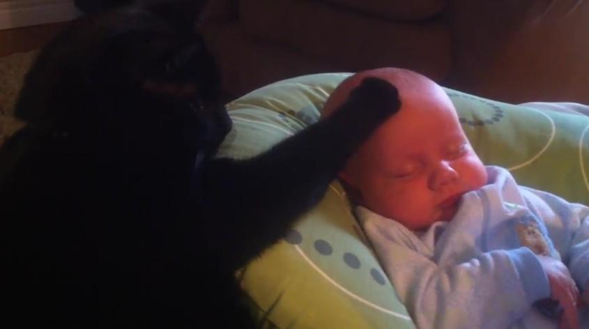 Не кот, а Кашпировский! Мама…