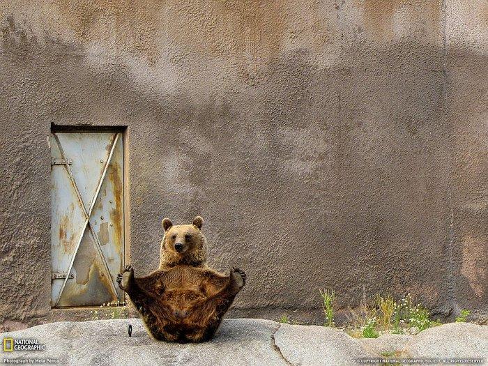 Финляндия зоопарк