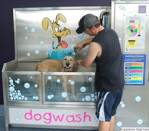 В Петербурге моют и подстригают бездомных собак.
