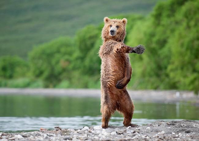1. «Хееееееееей, макарена!» животные, танцы