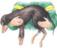 Несколько простых шагов, которые могут спасти собаке жизнь после ДТП