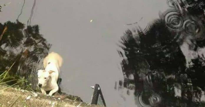 Пес цеплялся когтями за бетонное ограждение, он не мог выбраться из воды…