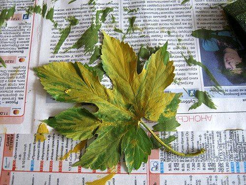 для разноцветных оттисков мажем листья несколькими цветами сразу