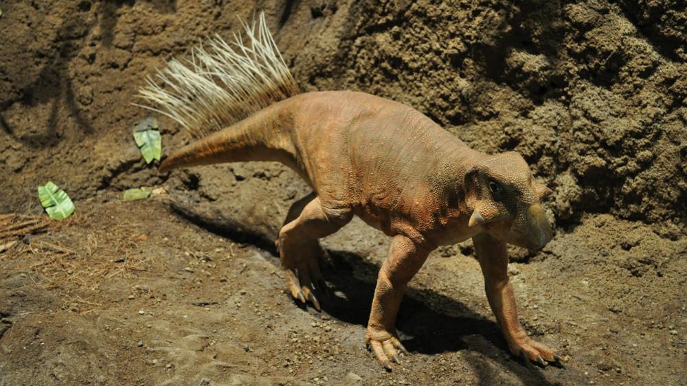 3. Пситтакозавр (Кемеровская область). динозавры, доисторические животные, животные, история