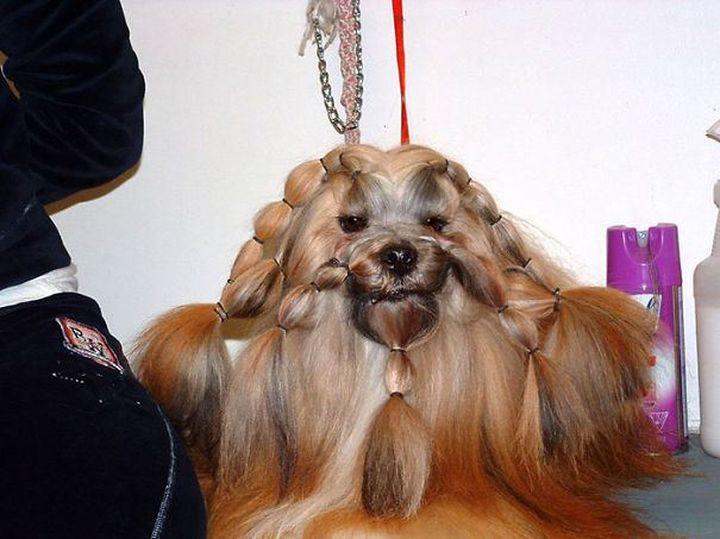 Только что из салона животные, коса