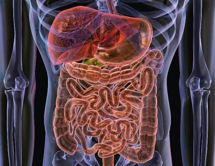 очищение кишечника холосас сенна изюм рецепт