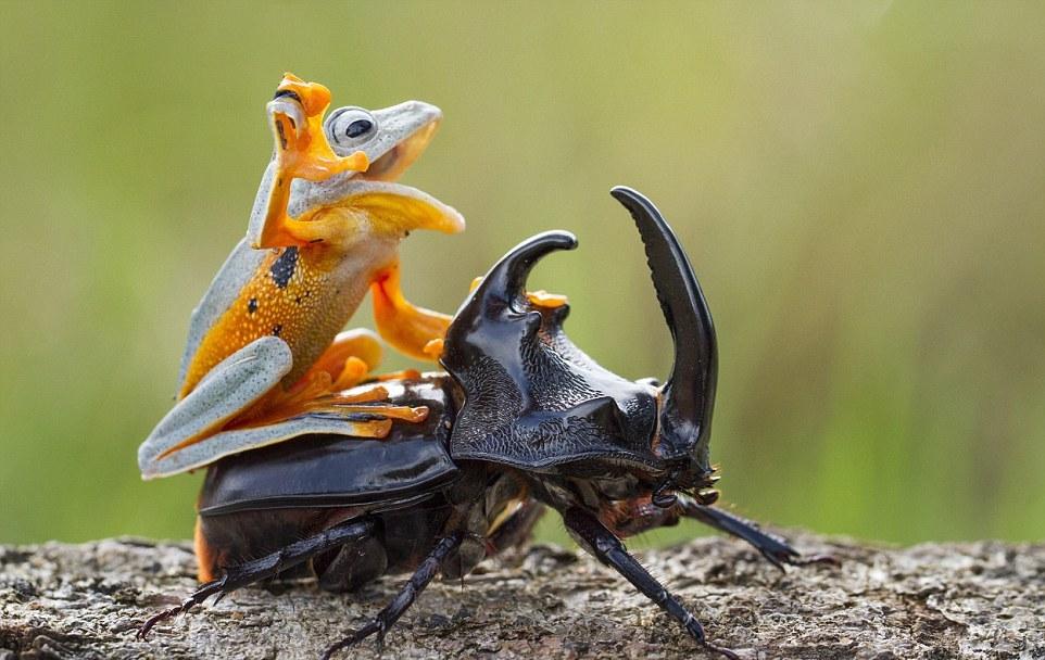 Приключения древесной лягушки и рогатого жука