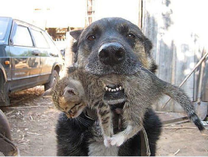 Кто то с первого взгляда будет считать что собака сейчас убьёт котёнка котенок, собака, спасение