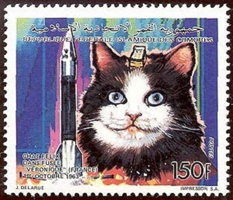 animalspace09 История покорения космоса животными