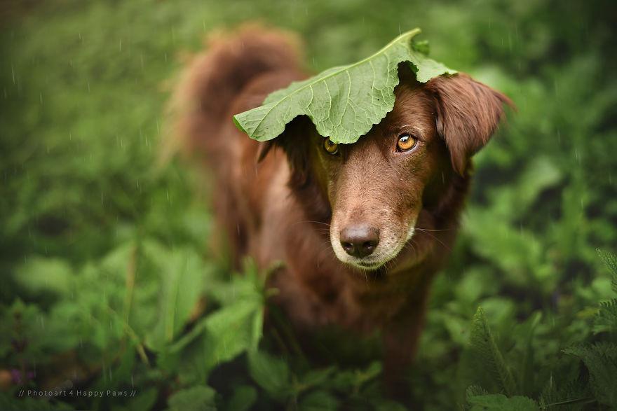 20 животных, прячущихся от дождя под натуральными «зонтиками» животные, зонтик