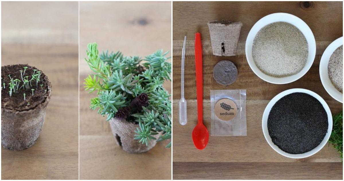 Свежий взгляд на комнатные растения — необычный декор для интерьера