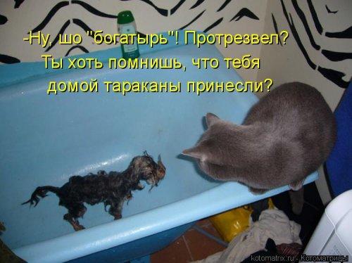 Новая котоматрица (40 фото)