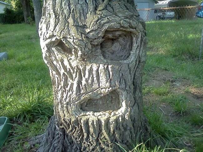 Деревья — как живые