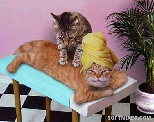 Кошачий массаж: почему они делают это?