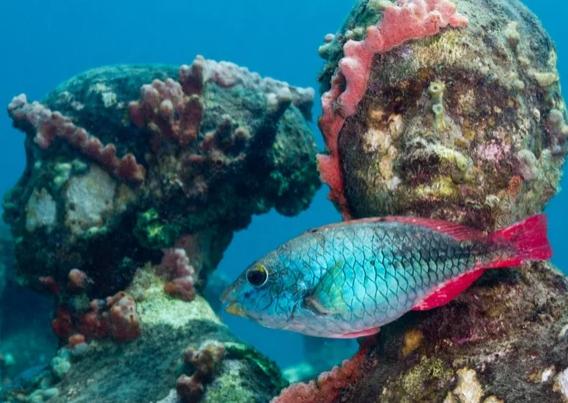 Главные загадки подводного мира