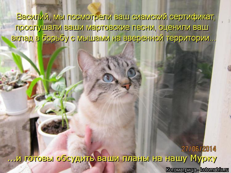 Котоматрица: Василий, мы посмотрели ваш сиамский сертификат, прослушали ваши мартовские песни, оценили ваш вклад в борьбу с мышами на вверенной террито