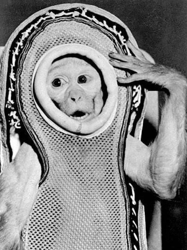 animalspace06 История покорения космоса животными