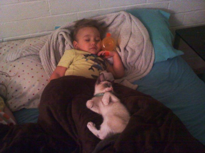 CatsGoldenHearts25 Почему мы любим кошек