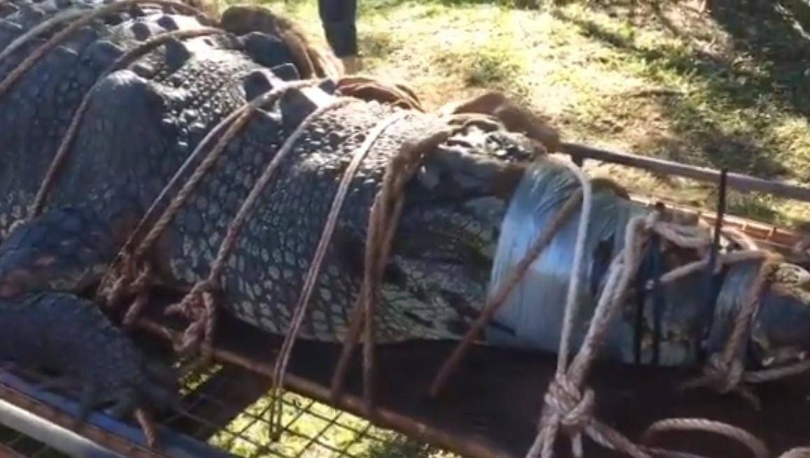 Данди по прозвищу «Крокодил»