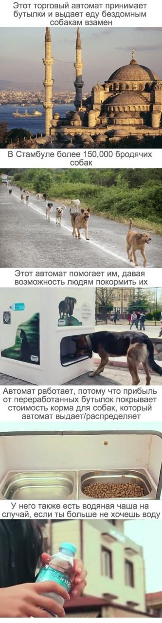 Интересный автомат в Турции животные, турция, позитив