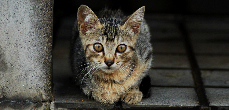 Как поймать сбежавшего кота. Советы