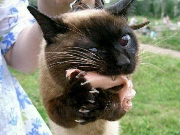Удачные кото-кадры