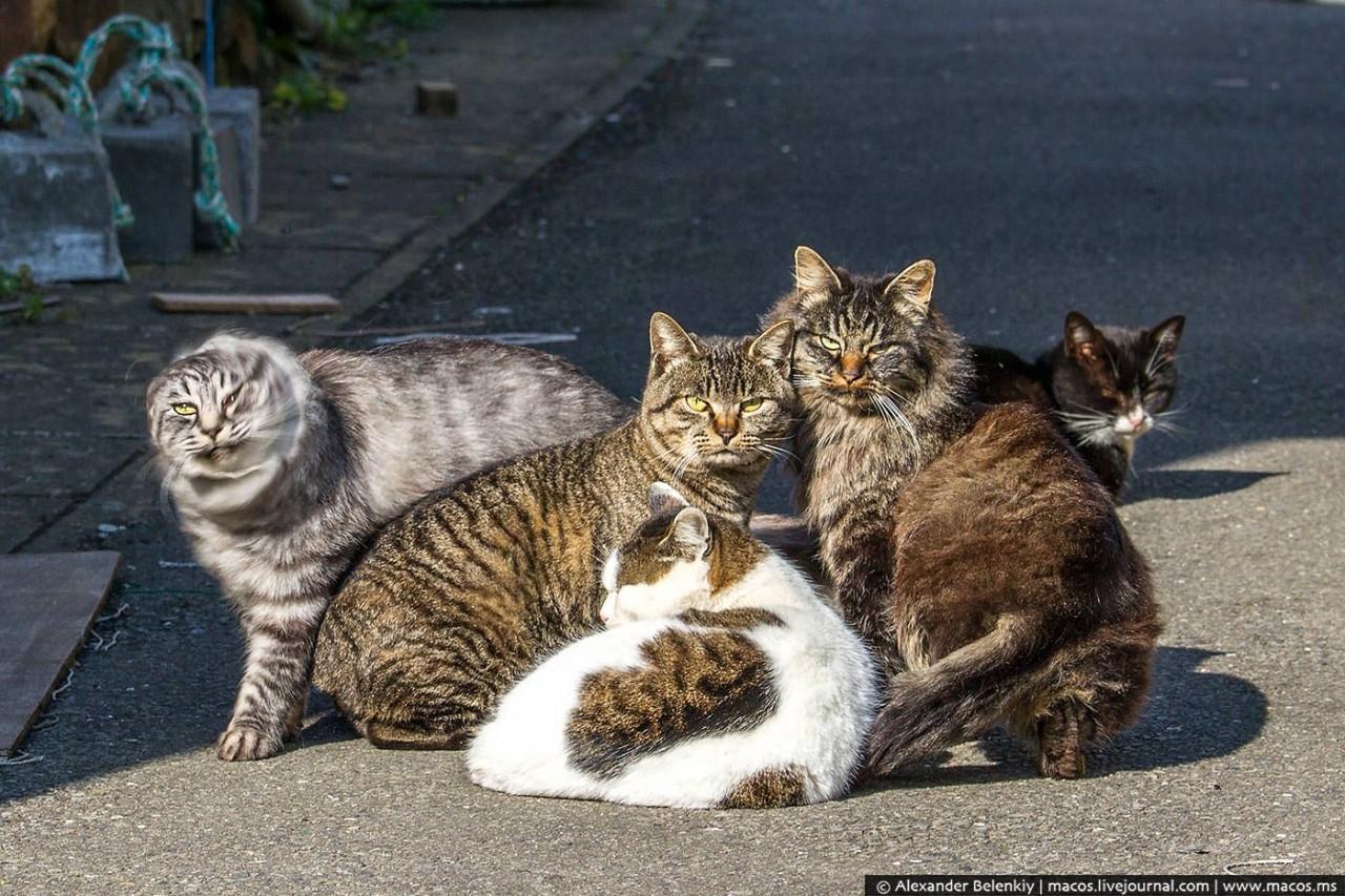 Остров, где количество кошек в десятки раз превосходит число людей