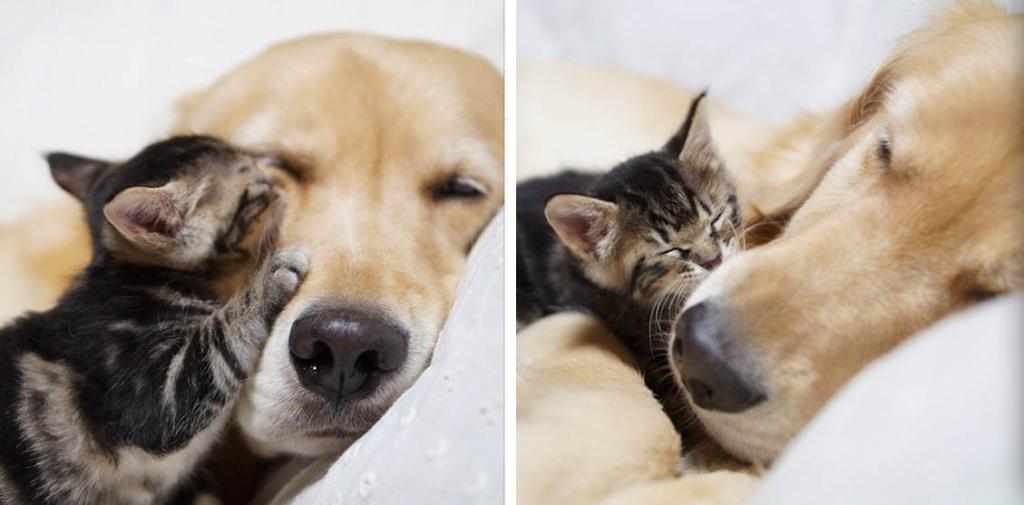 История о том, как пес удочерил кошечку