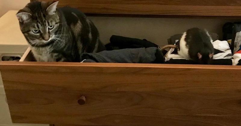 Том и Джерри в реальной жизни: необычная дружба кошки и крысы