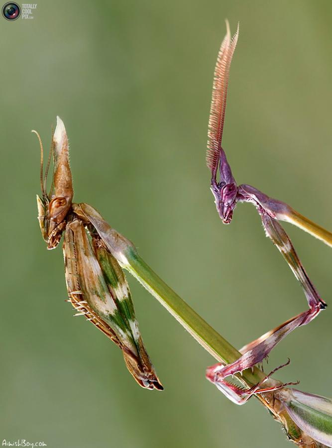 aimishboy 020 Удивительная макрофотография: неожиданно гламурные насекомые и многое другое