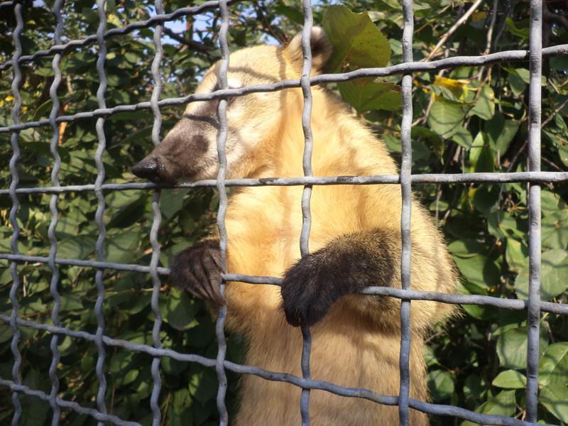 """Страсти по """"Тайгану"""" Тайган, животные, крым, львы, политика"""