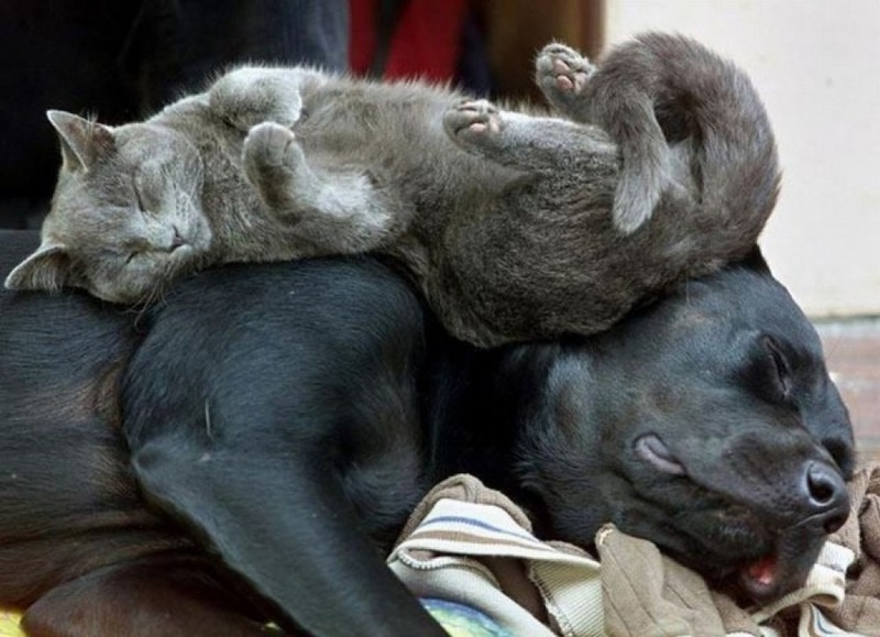 sleepingcats20 Коты, познавшие науку сна