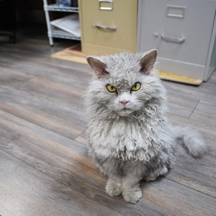 Смешные фото котов секс 1 фотография