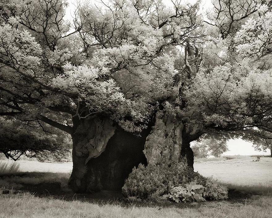 Деревья древние как мир в фотографиях из 14-летнего путешествия-19