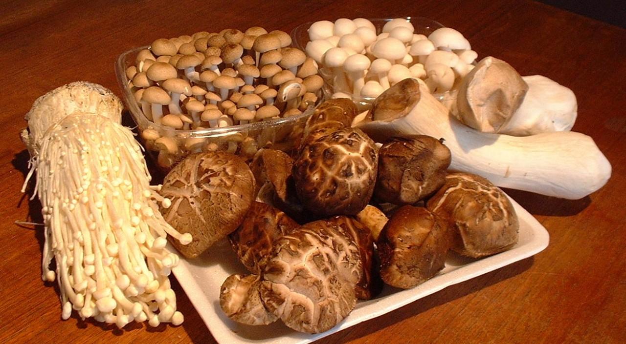 Целебные грибы шиитаке, мейтаке, рейши, кориолус и кордицепс