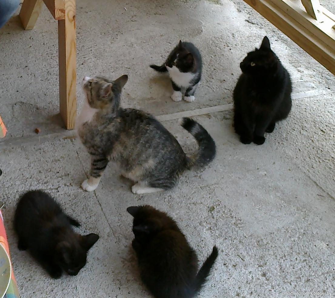 Деревенские коты.