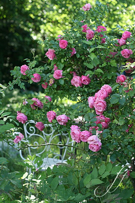 4497432_rosesingardeninspiration24 (450x675, 146Kb)