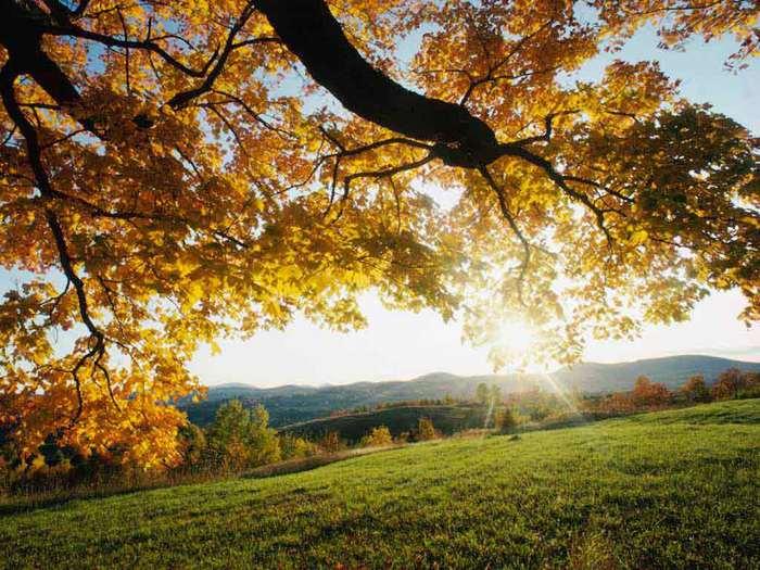 autumn_leaves (700x525, 78Kb)