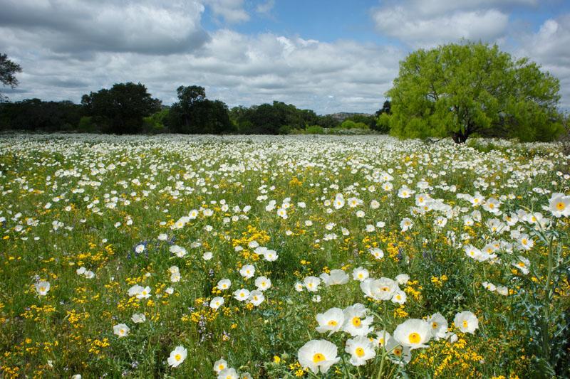 Фото полей с полевыми цветами