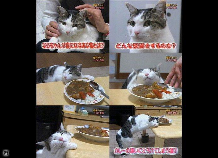 Комнатные звери против еды 17