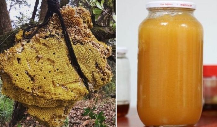 Безумный мед – лакомство, употребление которого может привести к непредсказуемым результатам