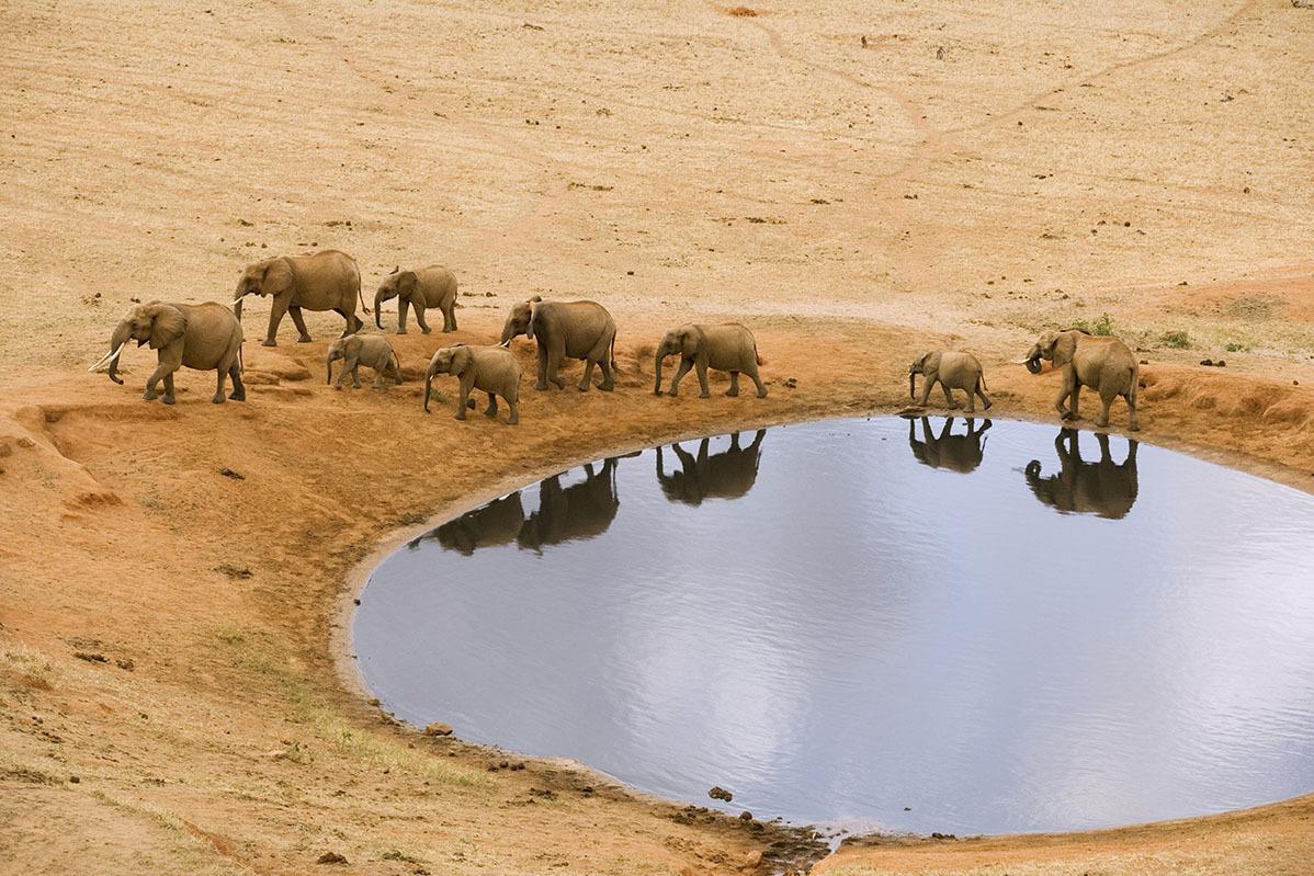 Красота и величие слонов