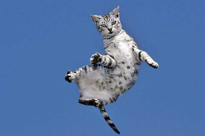 Кошаче-человечий разговорник