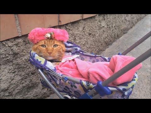 Приколы про животных Собака поёт Кошка соску сосёт Смешные и милые домашние животные питомцы Pets
