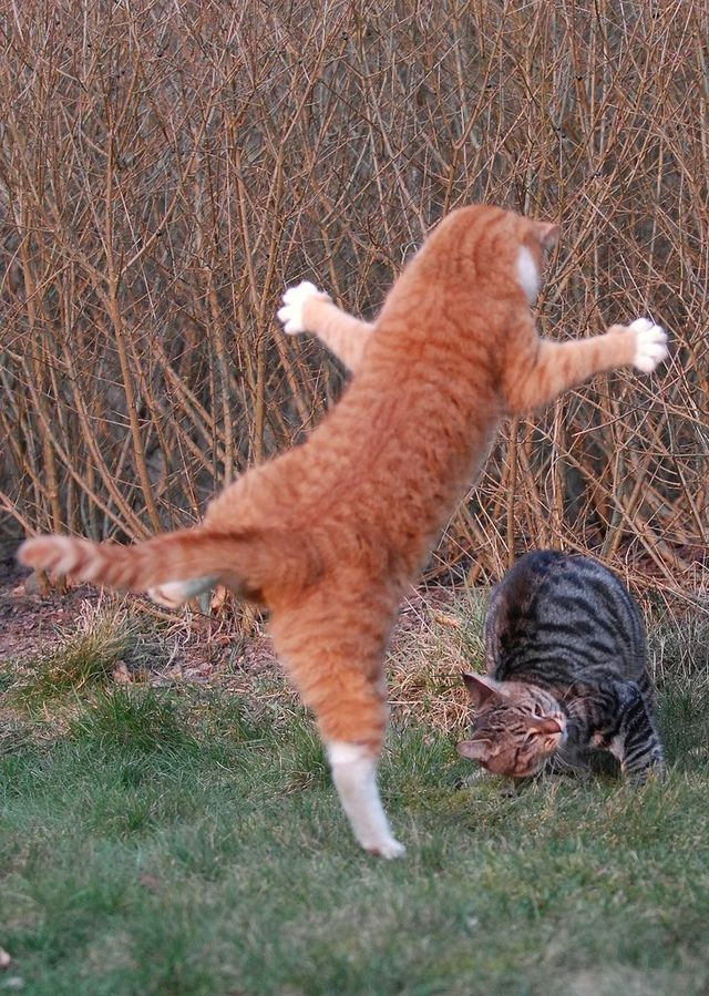 cat_flying_fight_13
