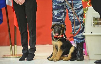 Щенок Добрыня будет служить в элитном отделе полиции Франции